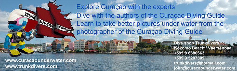 Dive with the experts; dive with the authors of the Curacao Diving Guide